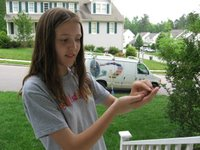 Emily caught a toad