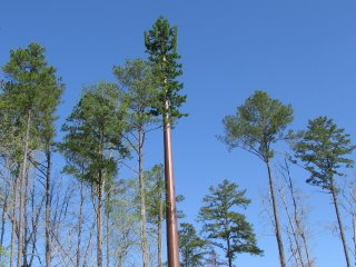 Mobile phone mast disguised as a tree