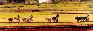 அழகிய என் கிராமம்