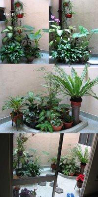 Collage of indoor garden pictures, taken Oct 2006