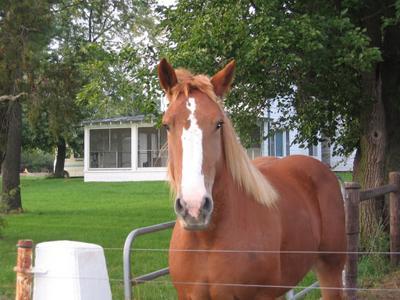 Purdue Horse Farm