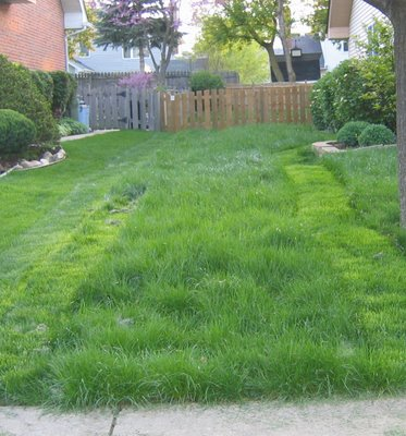 The lawn in a half-mowed condition
