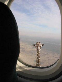...uma girafa!