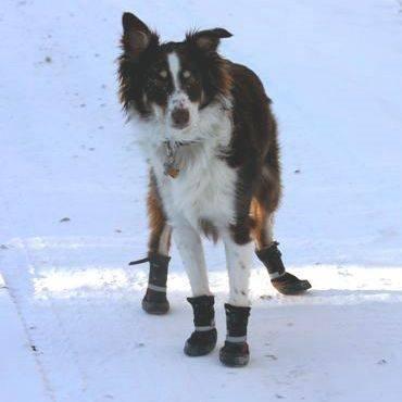 Neo Paws Dog Walking