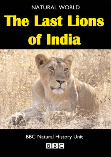 Watch The Last Lions Of India Online Po Imprezie Horror Chomikuj