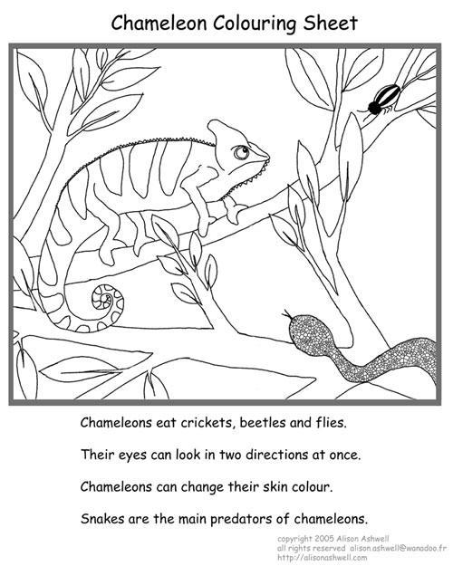 alison wonderland chameleon activities for kids