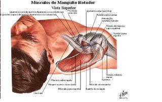 Reabilitação do ombro-fortalecimento do manguito rotador.
