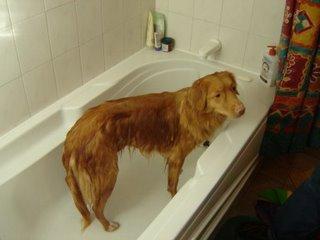 Kenya gets a bath.