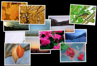 Screenshot of a collage of images from Google Screensaver