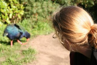 takahe encounter