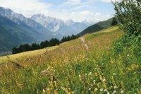 Prairie fleurie entre Val Sinestra et Tschlin