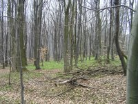 Les sous bois du Wienerwald