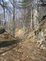 Chemin creux en montant vers la Hohe Mandling