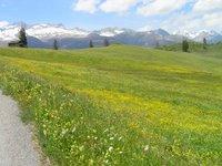 Au dessus de Curaglia, une prairie fleurie