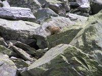 Pause en compagnie des marmottes