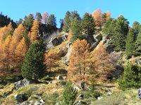 Forêt clairsemée du Vallon de Urtier