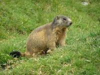 Madame Marmotte, profession arbitre de football, présentement en vacances de remise en forme