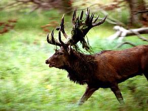 Største hjort skutt i norge