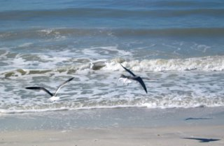 Gulls on the beach