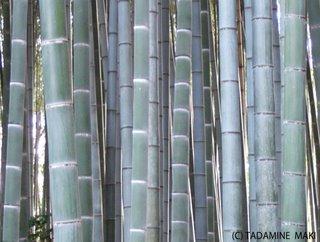 bamboo, Kyoto sightseeing
