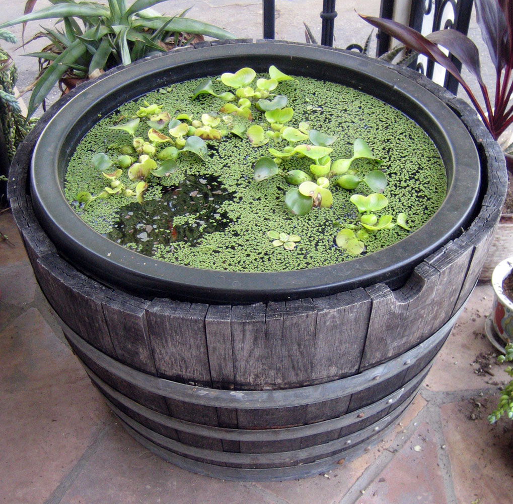 bleu arts container water garden