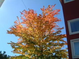 fall leaves 2005