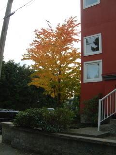 fall leaves 2004