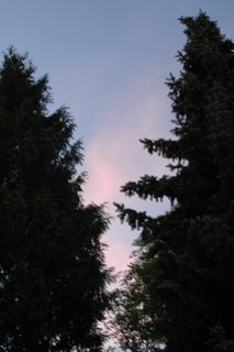 trees at sunset