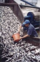 Chimbote fish factory