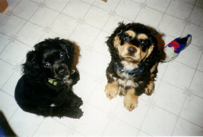 Thor and Loki in their early days.
