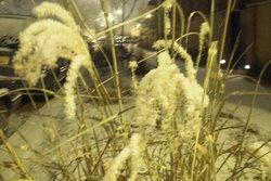 snowgrass3