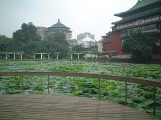 Lotus pond and National History Museum at Taiwan National Botanical Garden
