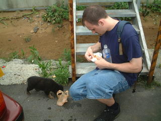 Feeding stray black puppy dog bread and water in Taiwan by Fisherman's Wharf