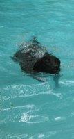 I swimmin'!  I swimmin'!