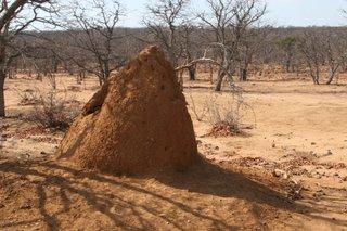 Termite Mound...