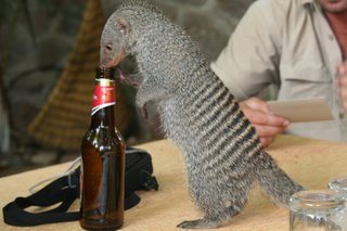 The most adorable little mongoose...