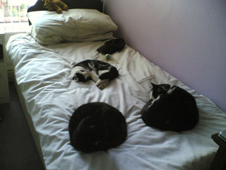 This is what they get up to when the lodger leaves the bedroom door open ...
