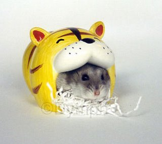 cat mouth hamster nest