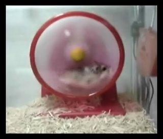 hamster roller coaster