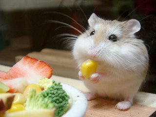 world peace hamster