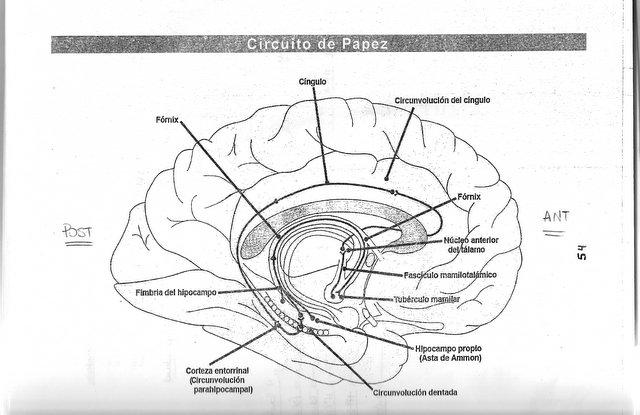 Circuito De Papez : De santorini circuito papez
