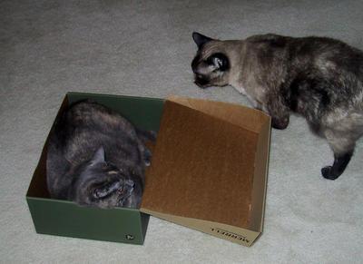 Hakuna and Matata