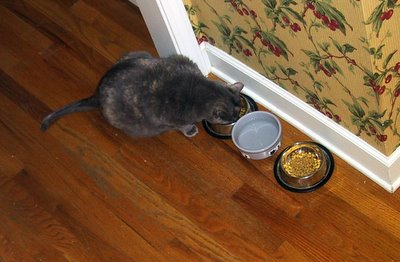 Kitty Dining 1