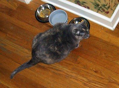 Kitty Dining 2