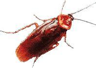 Mr. Roach