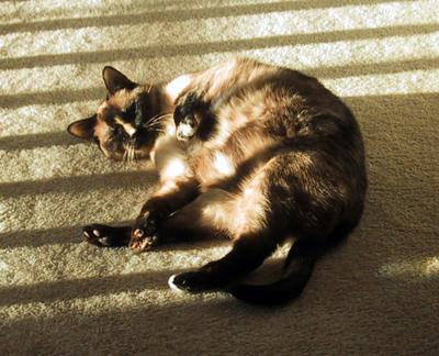 Sunbathing Hakuna