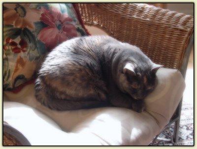 Matata in the Sunroom