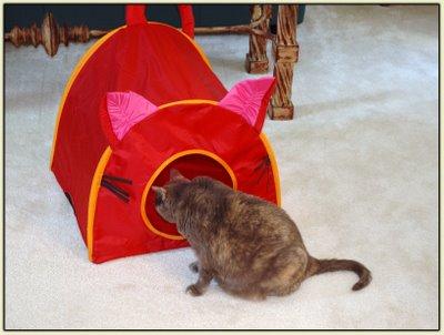 Tata Tent 2