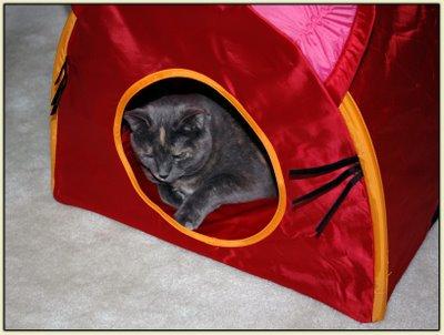 Tata Tent 5