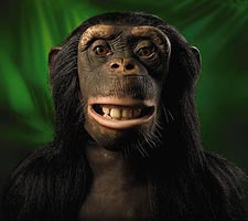 alive chimpanzee